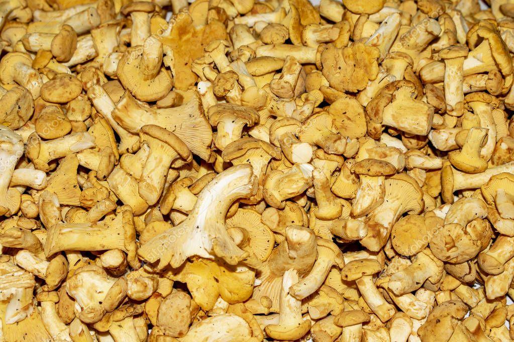 mushrooms chanterelles background image, texture mushrooms chanterelle