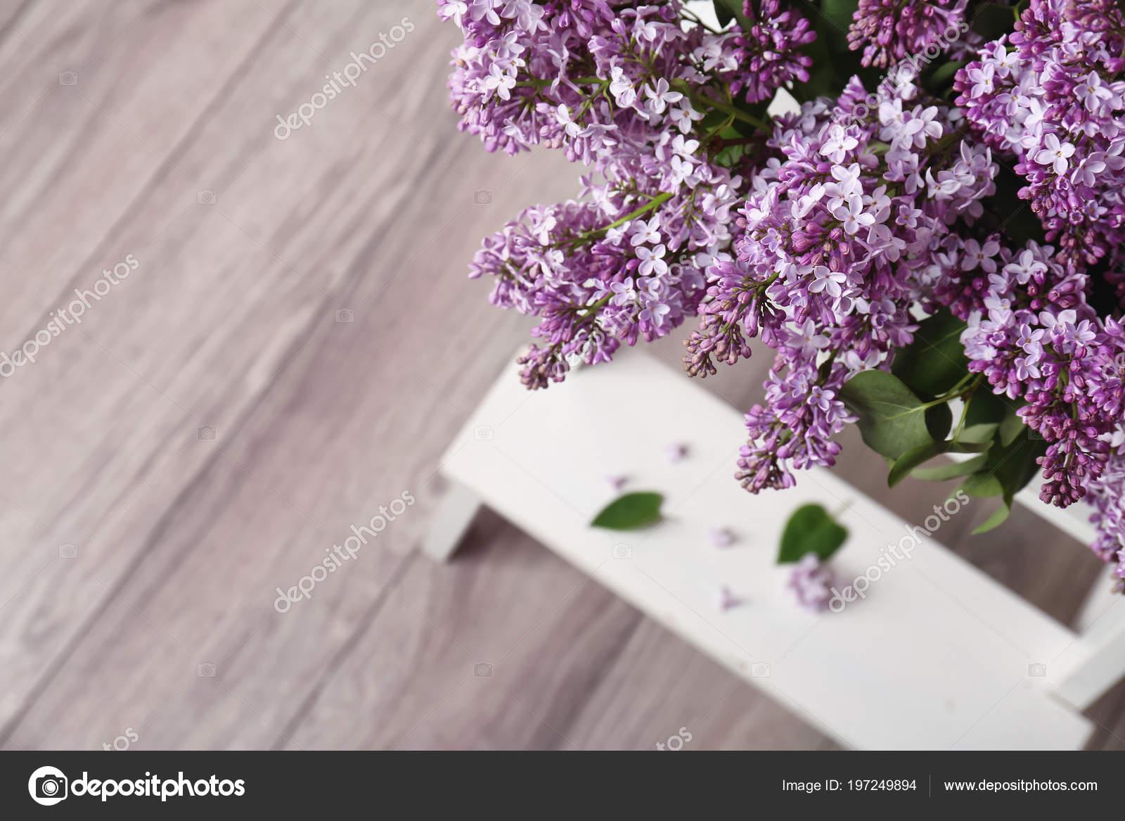 Floraison Lilas Interieur Fleurs Printemps Photographie