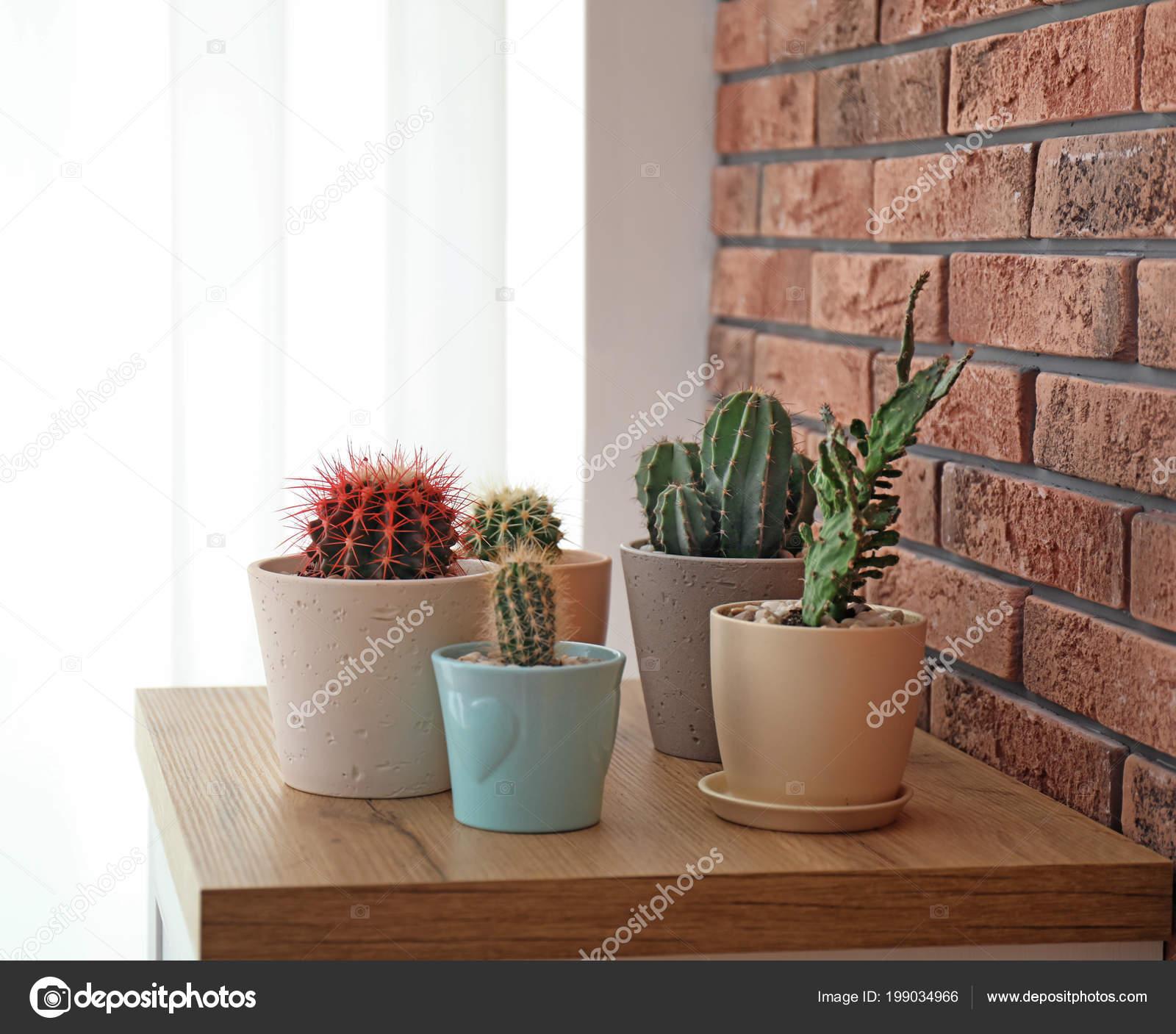 Piękne Kaktusy Doniczki Stole Pobliżu Mur Cegły Zdjęcie