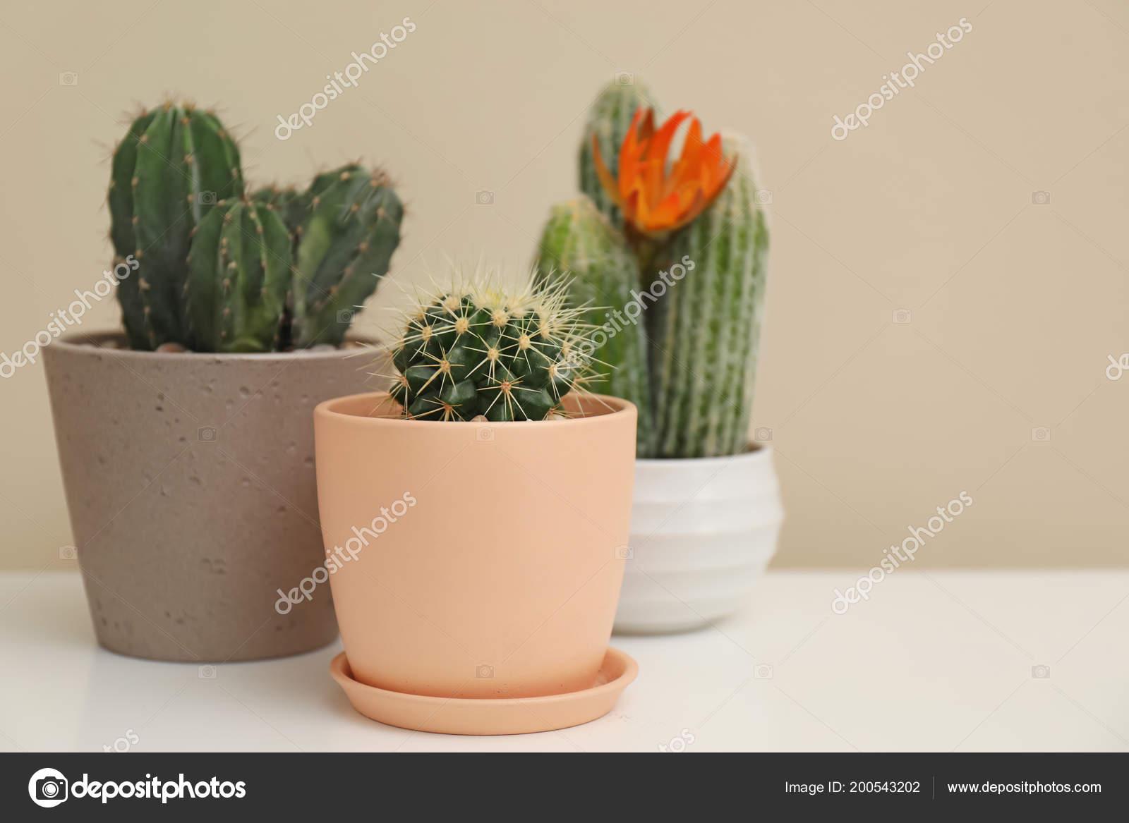 Inne Piękne Kaktusy Doniczki Stole Zdjęcie Stockowe
