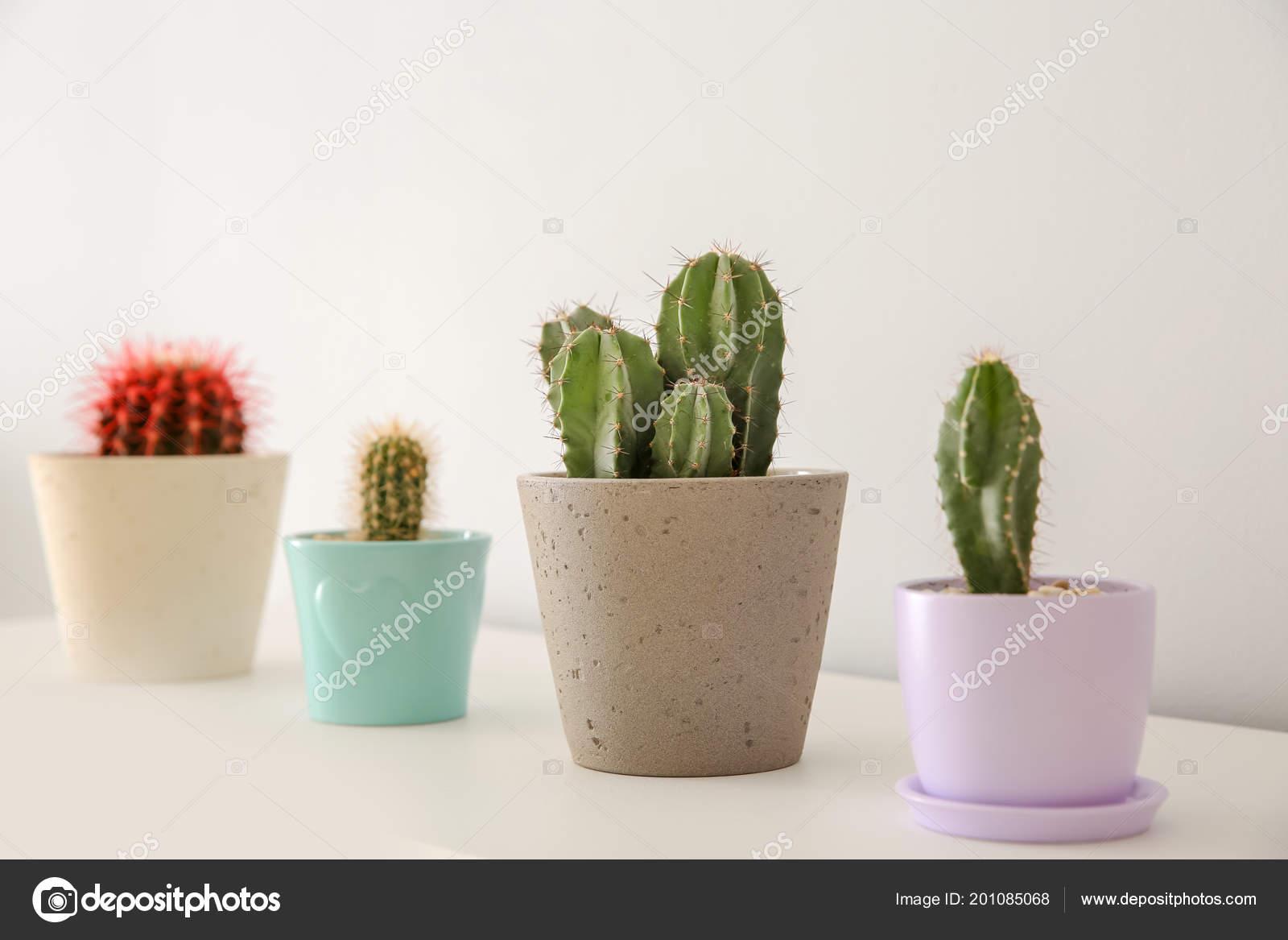 Piękne Kaktusy Doniczki Biały Stół Pomieszczeniu Zdjęcie