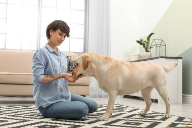 Adorable yellow labrador retriever with owner at home
