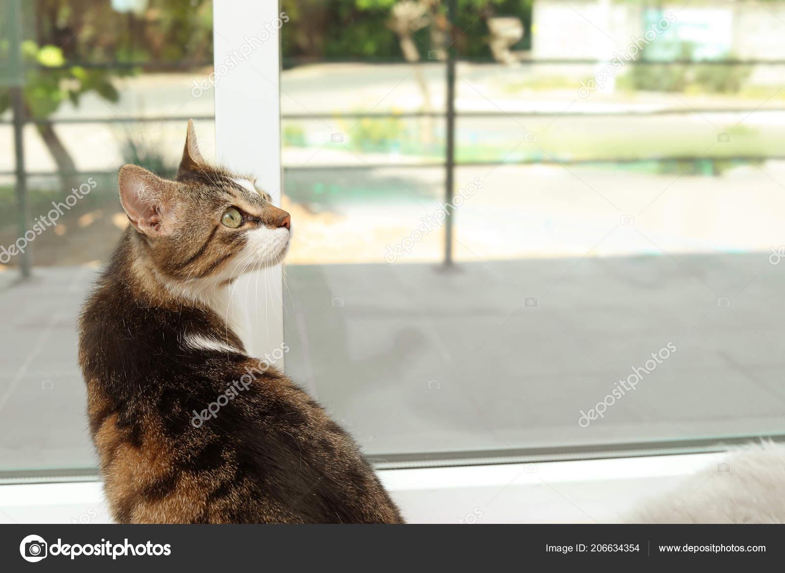Susse Katze Auf Der Fensterbank Hause Sitzen Stockfoto