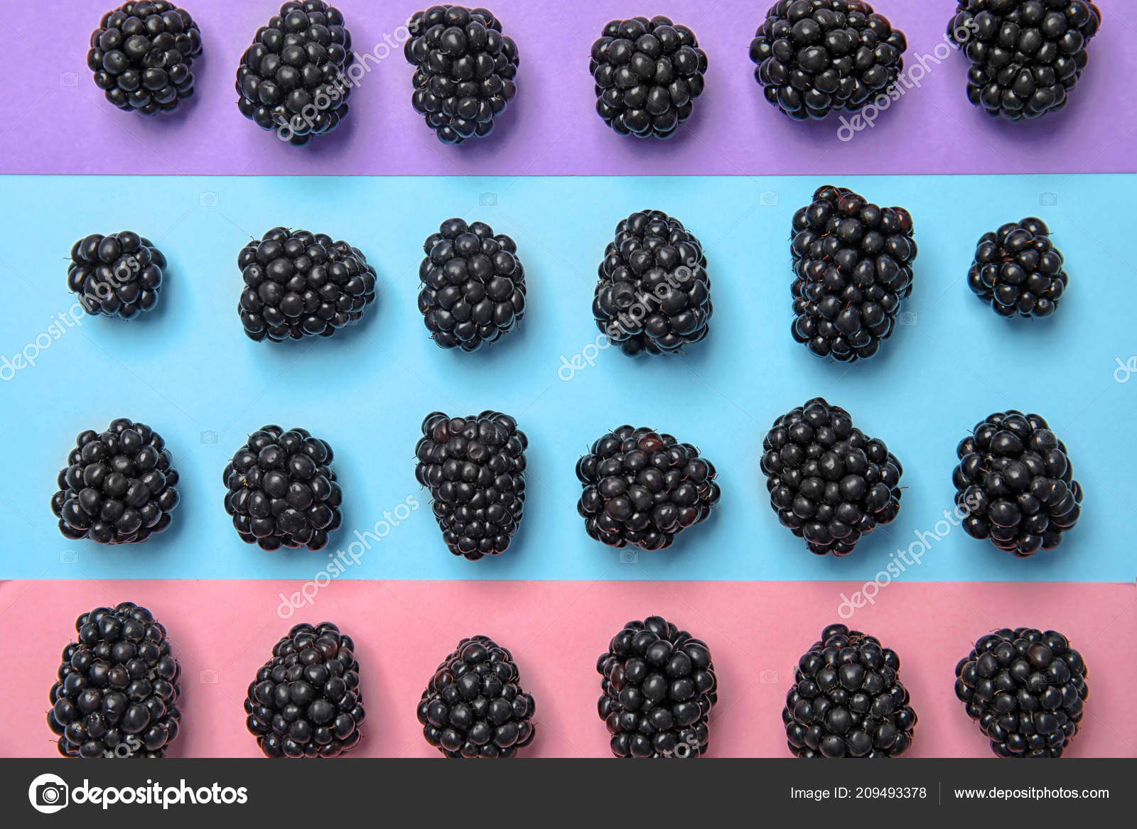 Blackberries Pictures To Color