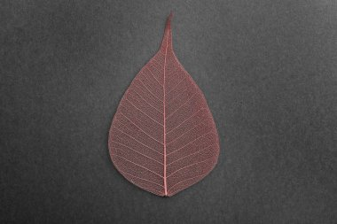 Beautiful decorative skeleton leaf on black background, top view