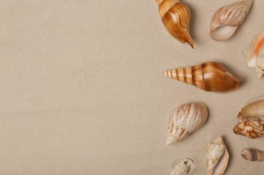 Seashells on beach sand, top view with space for text