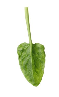 Fresh leaf of spinach isolated on white