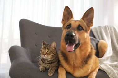 Cat and dog together on sofa indoors. Funny friends