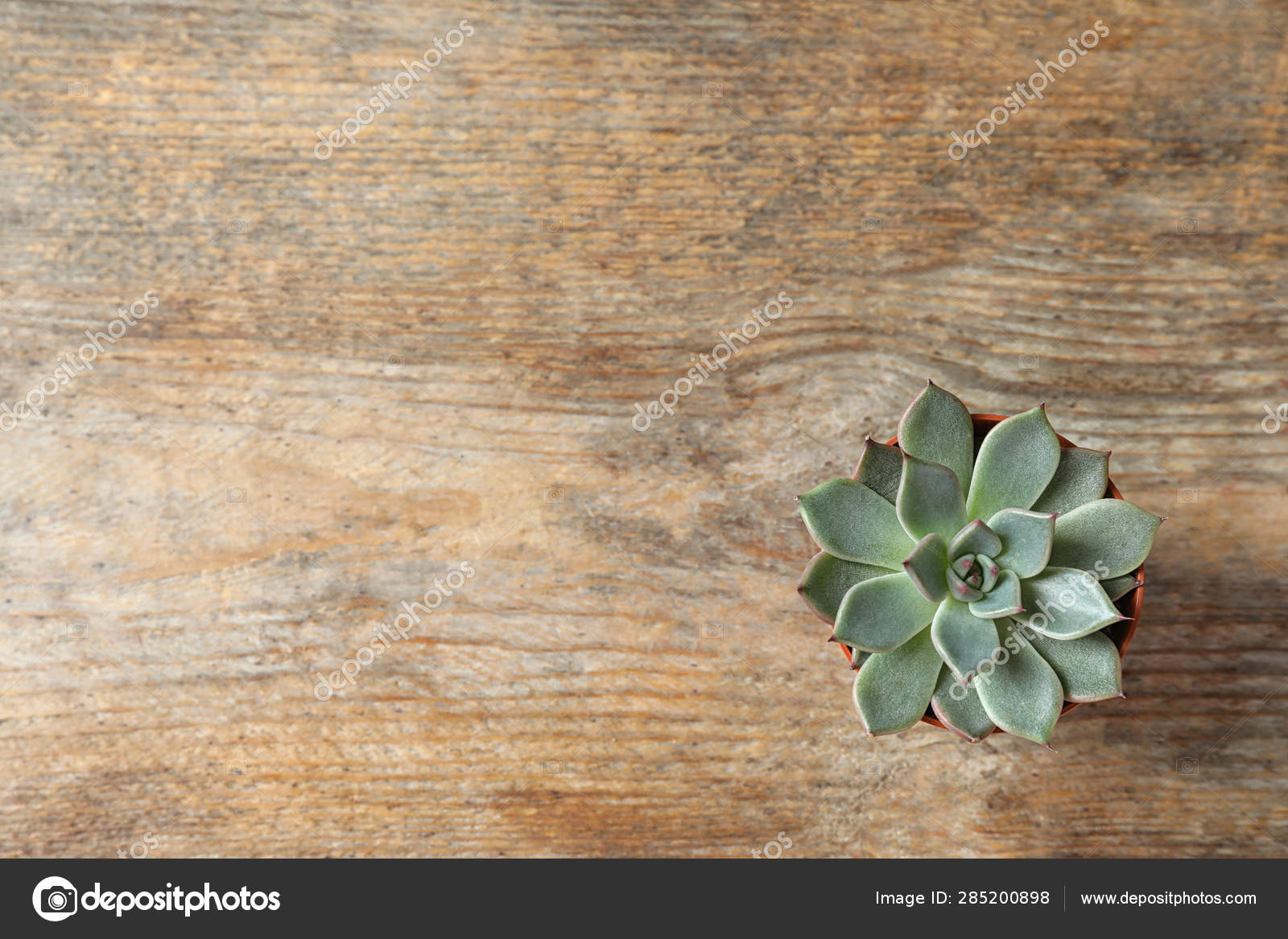 Beautiful Succulent Plant In Pot On Wooden Table Top View With Space For Text Home Decor Stock Photo Image By Newafrica 285200898
