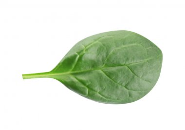 Fresh green leaf of healthy baby spinach on white background