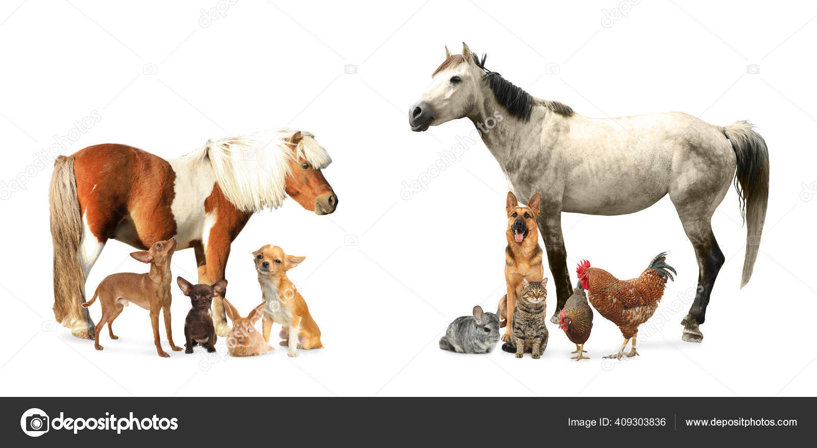 Collage Horse Other Pets White Background Banner Design Stock Photo C Liudmilachernetska Gmail Com 409303836