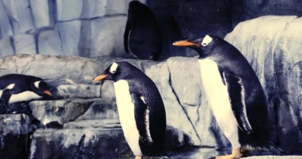 The Biggest Thematic Aquarium Of The World.  Penguins in the aquarium.