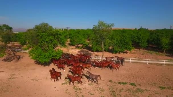 Futó lovak. Ló-Farm