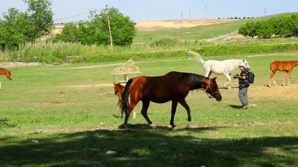 Koňská farma a pastviny se těší