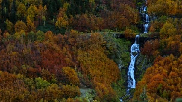 Vízesés természetes Forest. fenyőfák vízeséssel