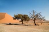 Fotografie Eine Gemsbok Antilope unter Schutz vor der Sonne unter einem Baum in der namibischen Wüste