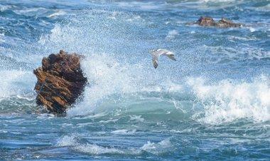"Картина, постер, плакат, фотообои ""swift tern пролетает над штормовыми волнами птицы цветы города"", артикул 200777252"