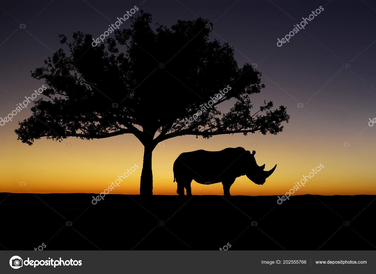 Silhouette White Rhino Standing Tree Sunset Background — Stock Photo