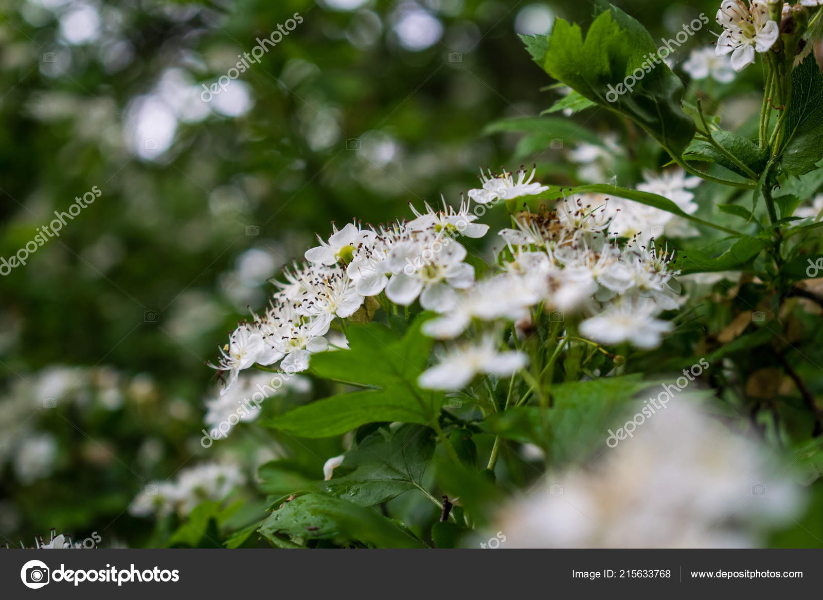 Pictures Small Flower Trees Flowering Tree Big Spring Bush Many