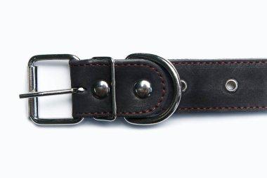 Adjustable dog collar on white background.