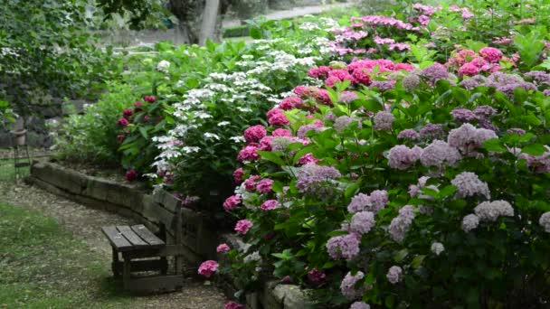 Krásné, čerstvé květiny v zahradě