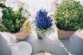 Fotografie plants