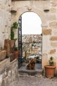 pes u otevřených dveří s majestátní pohled na skalní útvary v Kappadokie, Turecko