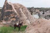 Fotografie kůň