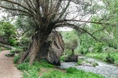 Fotografie tree