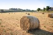 Fotografie agricultural