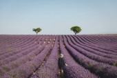 zadní pohled na mladé ženy při pohledu na pole malebné levandule v provence, Francie