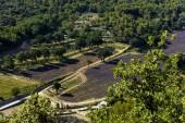 Fotografia campo di vista aerea della bella fioritura della lavanda e alberi verdi, Provenza, Francia