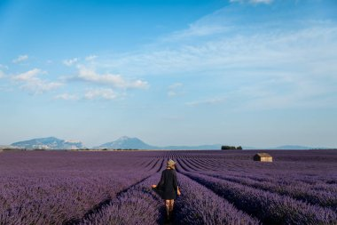Back view of girl walking on picturesque lavender field in provence, france stock vector