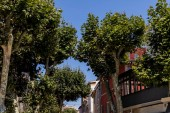 Fotografie low angle view of beautiful green trees in traditional french town in provence