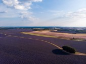 Fotografia aerial view of beautiful lavender field, trees and rural road in provence, france