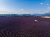 Letecký pohled na krásné kultivované levandulová pole, statek a hory v dálce, provence, Francie