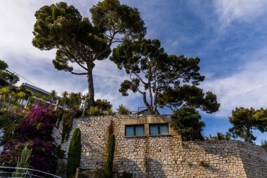 low angle view of beautiful traditional architecture and tall trees in provence, france