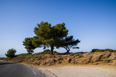 empty asphalt road and beautiful green trees at sunny day, provence, france