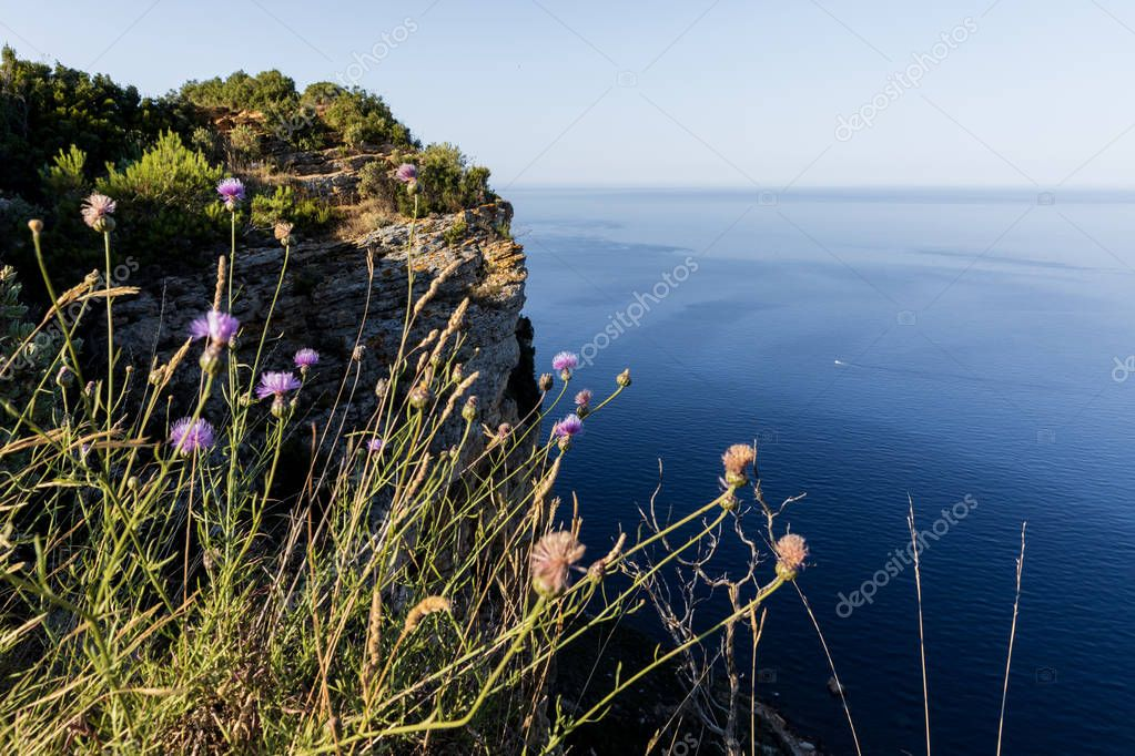 close-up view of beautiful wildflowers and majestic natural view with calm sea and cliff, Calanques de Marseille (Massif des Calanques), provence, france
