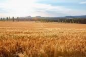 Fotografie zemědělství