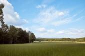 zelená tráva na pole, stromy a modrá obloha v Bad Schandau, Německo