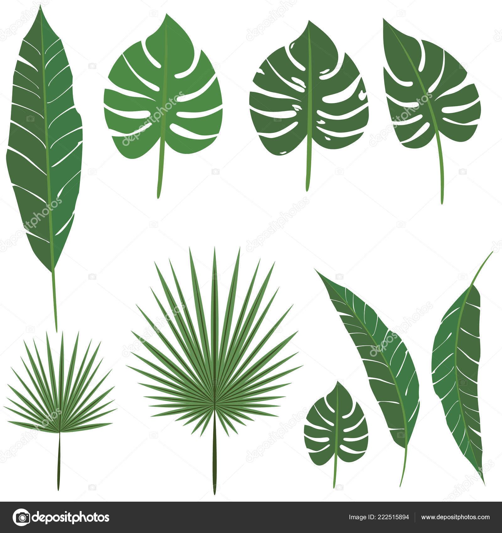 Palm Leafs Diy Set Decoration Design Print Web Nature Exotic Stock Vector C Pollywa 222515894