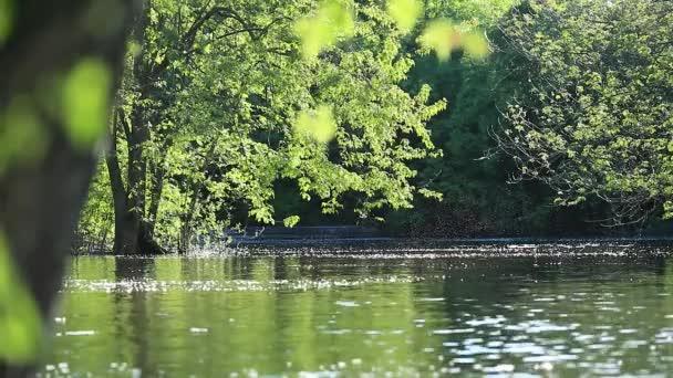 Malebné záběry s divoké přírody, stromy a keře rostou ve vodním prostředí. Kouzlo vodní hladiny řeky při západu slunce, v letním dni. Brilantní hmyz a strom chmýří, vytvářející efekt padající vločky nad vodou při západu slunce nebo slunce