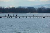 Fotografie Menschen auf der Uferpromenade und am Waldnetz am See