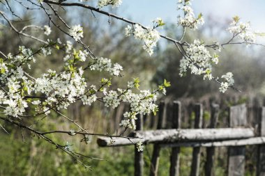 Rustic concept: branch of flowering apple-tree on a background a green garden.