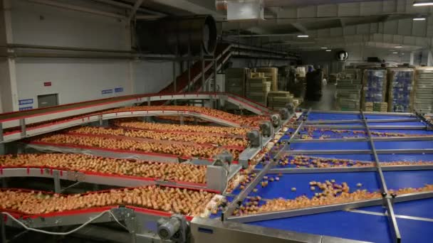 velký počet vajec