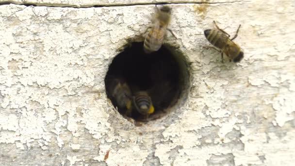 Z hor. Zářezy v úlu. Část 2.
