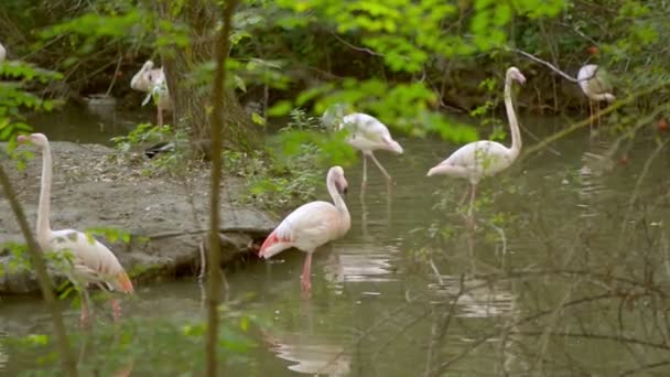 Group of flamingos relaxing in water