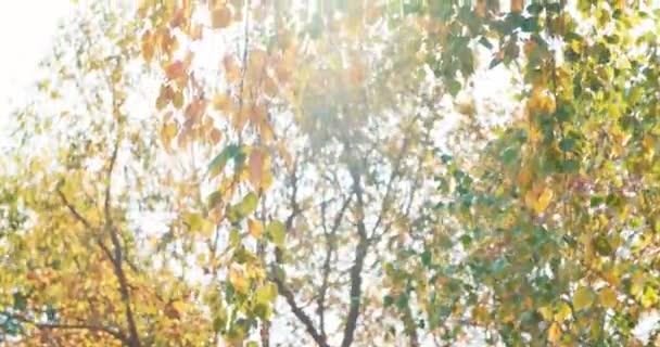 vítr se vlní a trhá z pestrobarevných březových listů