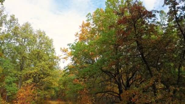 létající v dubovém lese pod větvemi dubu